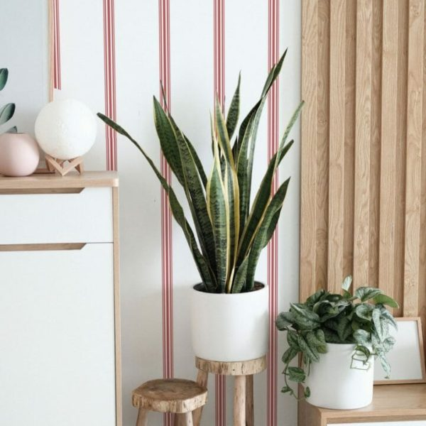 red french stripe peel and stick wallpaper